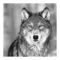 Ollie wolves